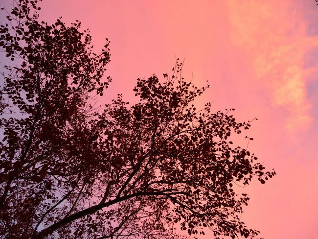 Red Sky Red Plum Tree Red Sky And Clouds Nature_collection Nature On Your Doorstep