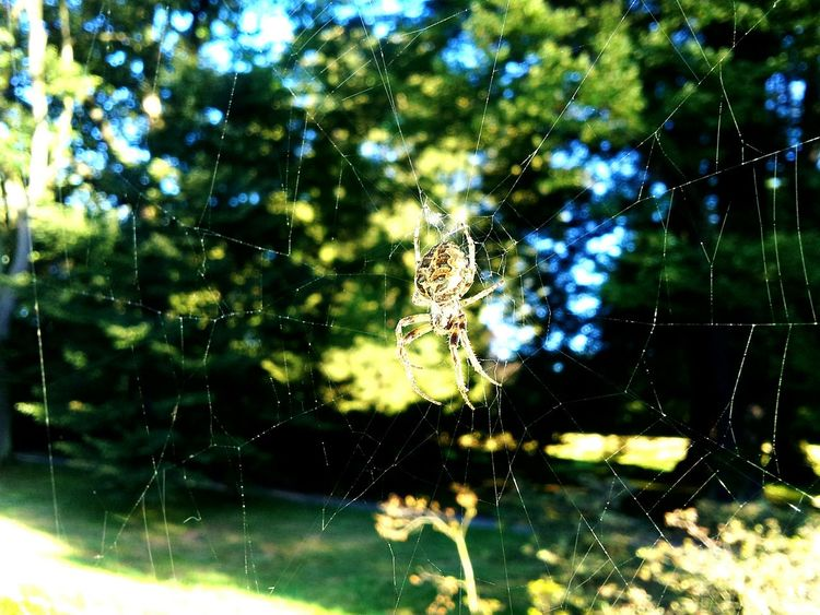 The Webs - Behind the scene One Animal Animal Themes Nature Animals In The Wild Spider Web Animal Wildlife Tree No People Beauty In Nature Outdoors Day Close-up Web Prague♡ Samsung Galaxy S II  Praha Beauty In Nature Nature Spiderweb Spider EyeEmNewHere