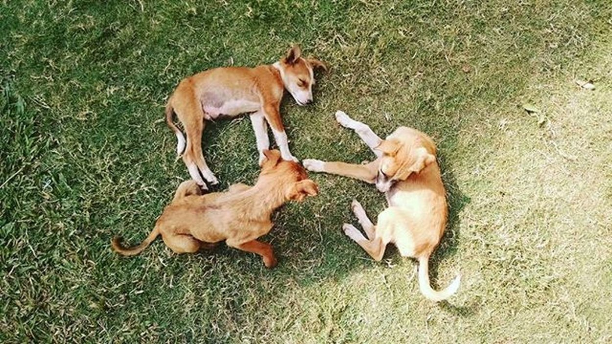 Coochie Coochie Mofo. Puppies Best  Bums