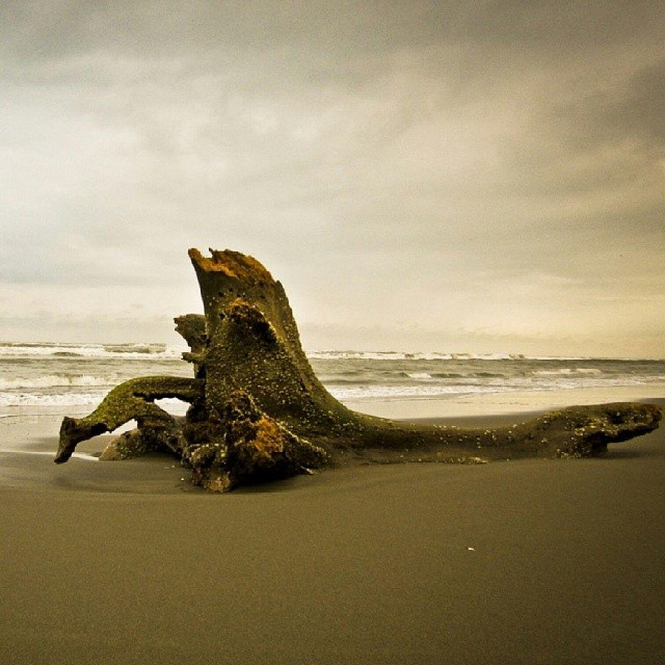 El perro Mexico Veracruz Casitas Playa mar costa esmeralda sea sky nature landscape igersmexico vive_mexico photojournalism mxdelosmx flickr
