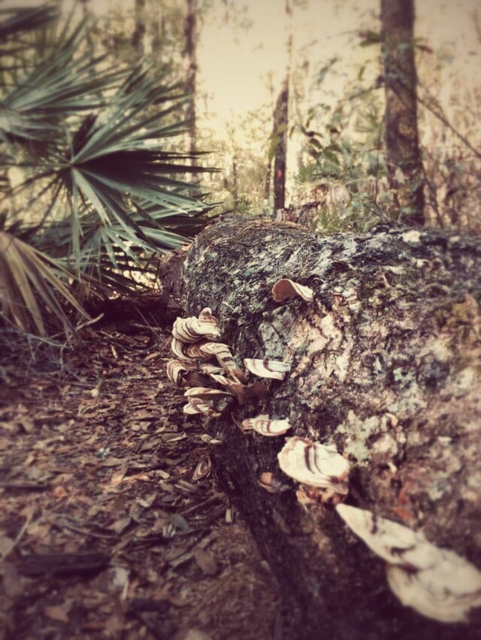 tree trunk, tree, no people, nature, outdoors, day, forest, close-up, textured, growth, dead tree, animal themes