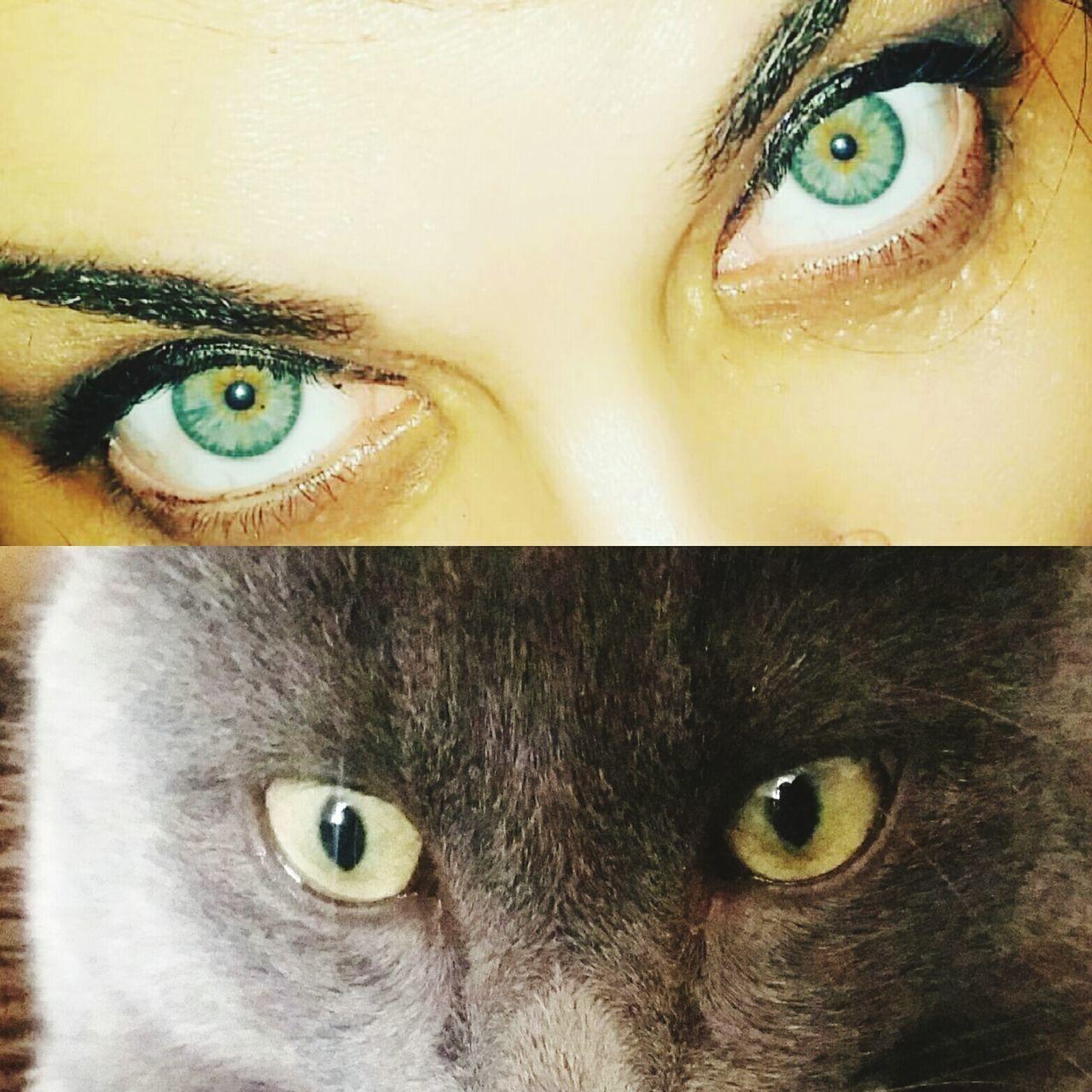 Occhi 👀 Human Eye Eye Occhidiprato Occhiverdi Occhi Di Gatto