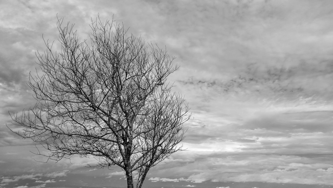 bare tree, branch, tree, sky, tranquility, beauty in nature, nature, majestic, scenics, cloud - sky, tranquil scene, low angle view, lone, outdoors, no people, day