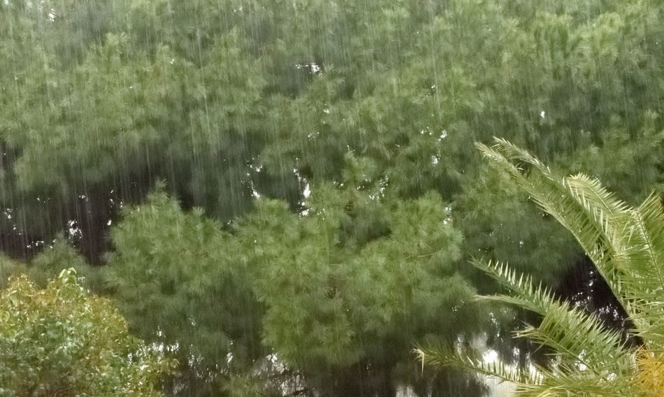 Last Spring Rain Maritime Pines Palm Trees Rain Rainy Days Subtropical