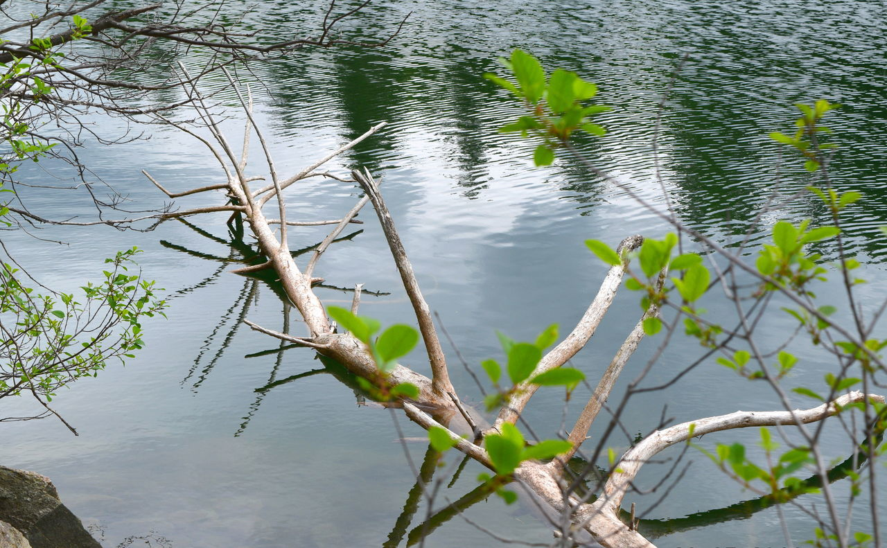 Beauty In Nature Branch Branch In Water Close-up Day Fragility Gatineau Park Grass Green Green Color Growing Growth Lake Lakeside Nature Pink Lake Plant Reflection Scenics Sky Reflection Stem Tranquil Scene Tranquility Tree Branch  Water