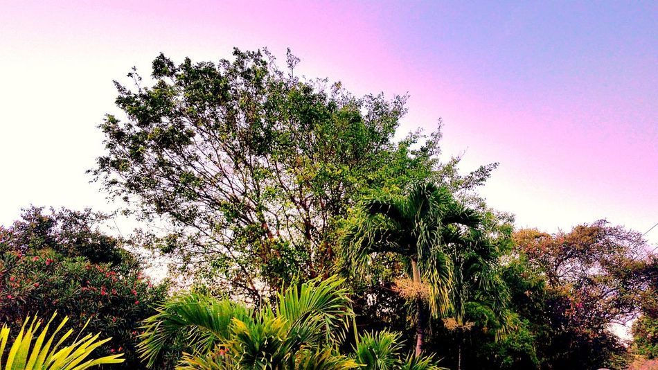 Growth Nature Low Angle View Beauty In Nature Outdoors Sky Day No People Trees Palm Trees Flowering Shrubs St.Croix, US Virgin Islands
