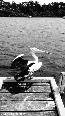 Day Water Sea Outdoors Nature No People Animal Themes Be. Ready. Beauty In Nature High Angle View Pelican shadow