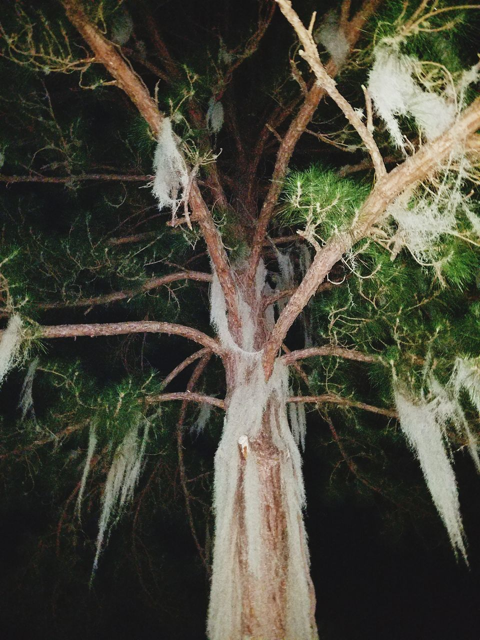 tree, plant, no people, nature, tree trunk, growth, branch, green color, night, close-up, outdoors, beauty in nature, leaf