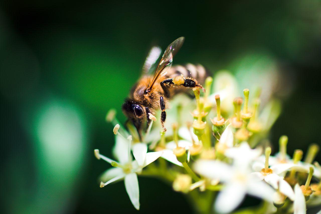 Beautiful stock photos of bee, Animal, Animal Themes, Bee, Botany