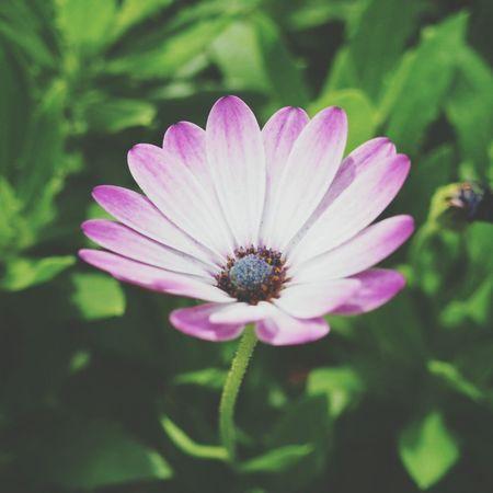 Flower Flowerporn Garden