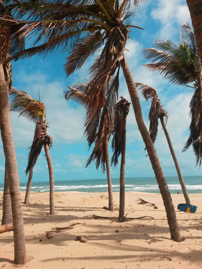 Beach Beauty In Nature Branch Day Horizon Over Water Nature No People Outdoors Palm Tree Sand Scenics Sea Sky Travel Tree Tree Trunk Tropical Climate Water