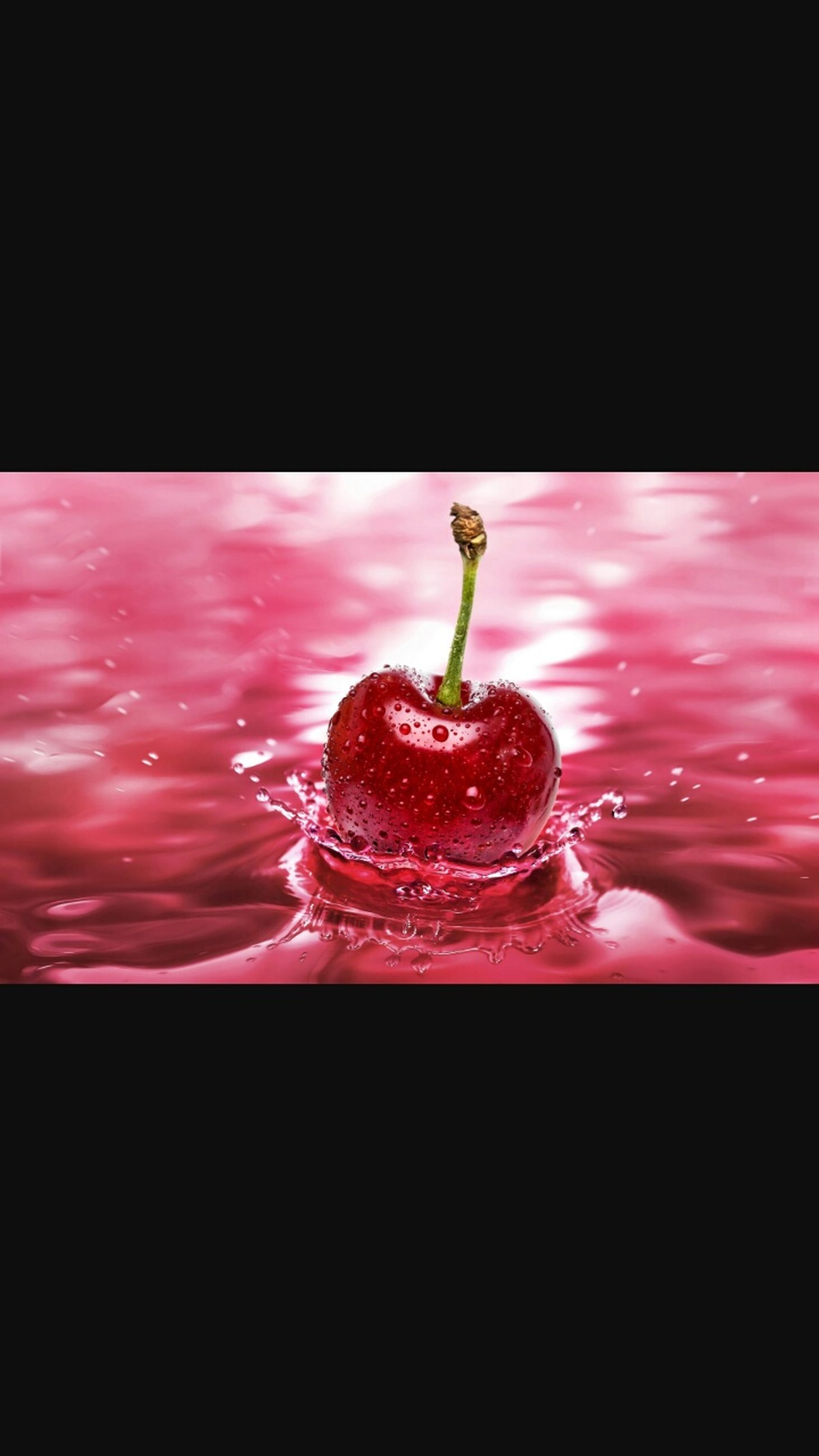 freshness, water, drop, close-up, red, studio shot, black background, pink color, flower, wet, food and drink, reflection, indoors, no people, splashing, fragility, copy space, focus on foreground, night, selective focus