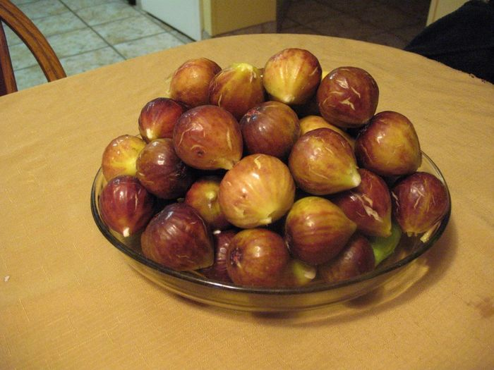Helped Dad pick some fresh figs from his tree yesterday. They're as sweet as sugar! Nomnombomb LaFamilia TheVille Streamzoofamily