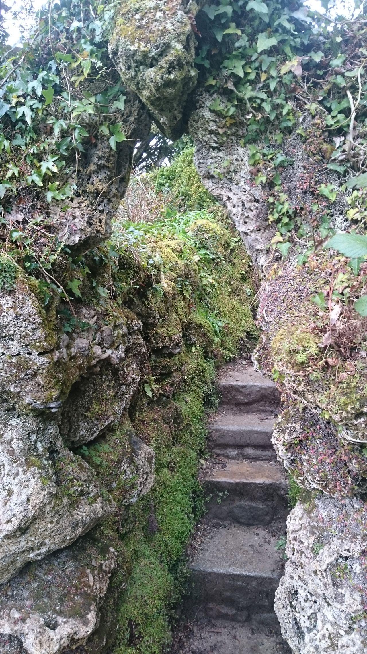 Growth Outdoors Nature No People Beauty In Nature Hiddenface Stone Garden Powerscourt Garden Ireland🍀