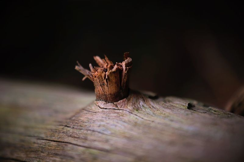Tree Branches Branch Tree Garden Detail Slivered Forest Floor Forest Walk Forest Wood - Material Selective Focus Close-up Tree Trunk Nature No People Textured  Tree Stump Dead Plant Day Outdoors Tree