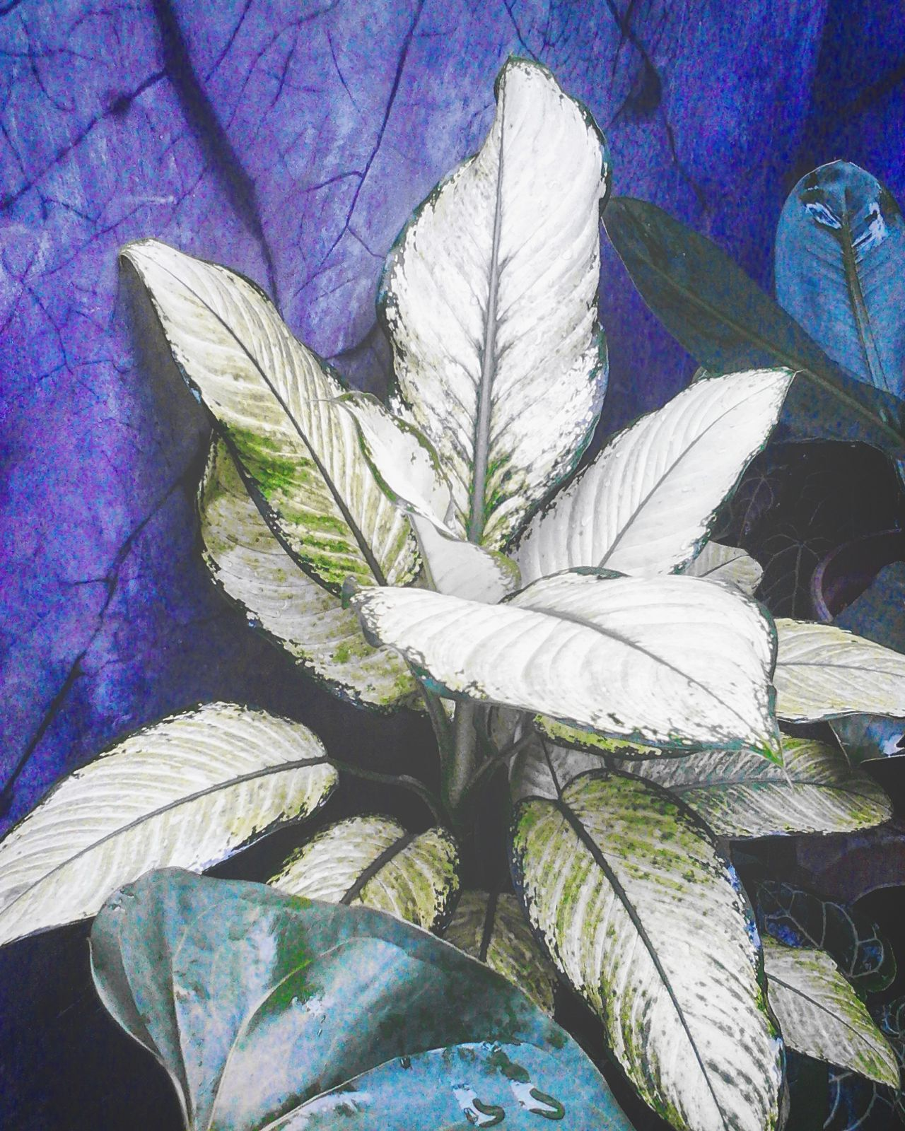 Leaf Plant Close-up Purple Nature Growth No People Flower Head Fragility Day Freshness Beauty In Nature Indoors