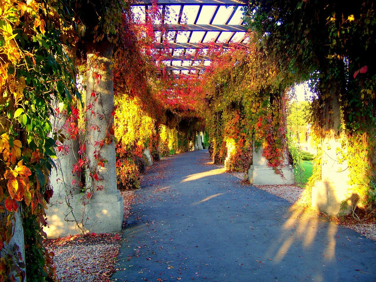 Covered Walkway At Park During Autumn