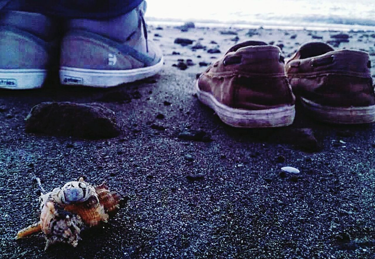 beach, sand, shoe, day, no people, outdoors, close-up, one animal, animal themes, nature
