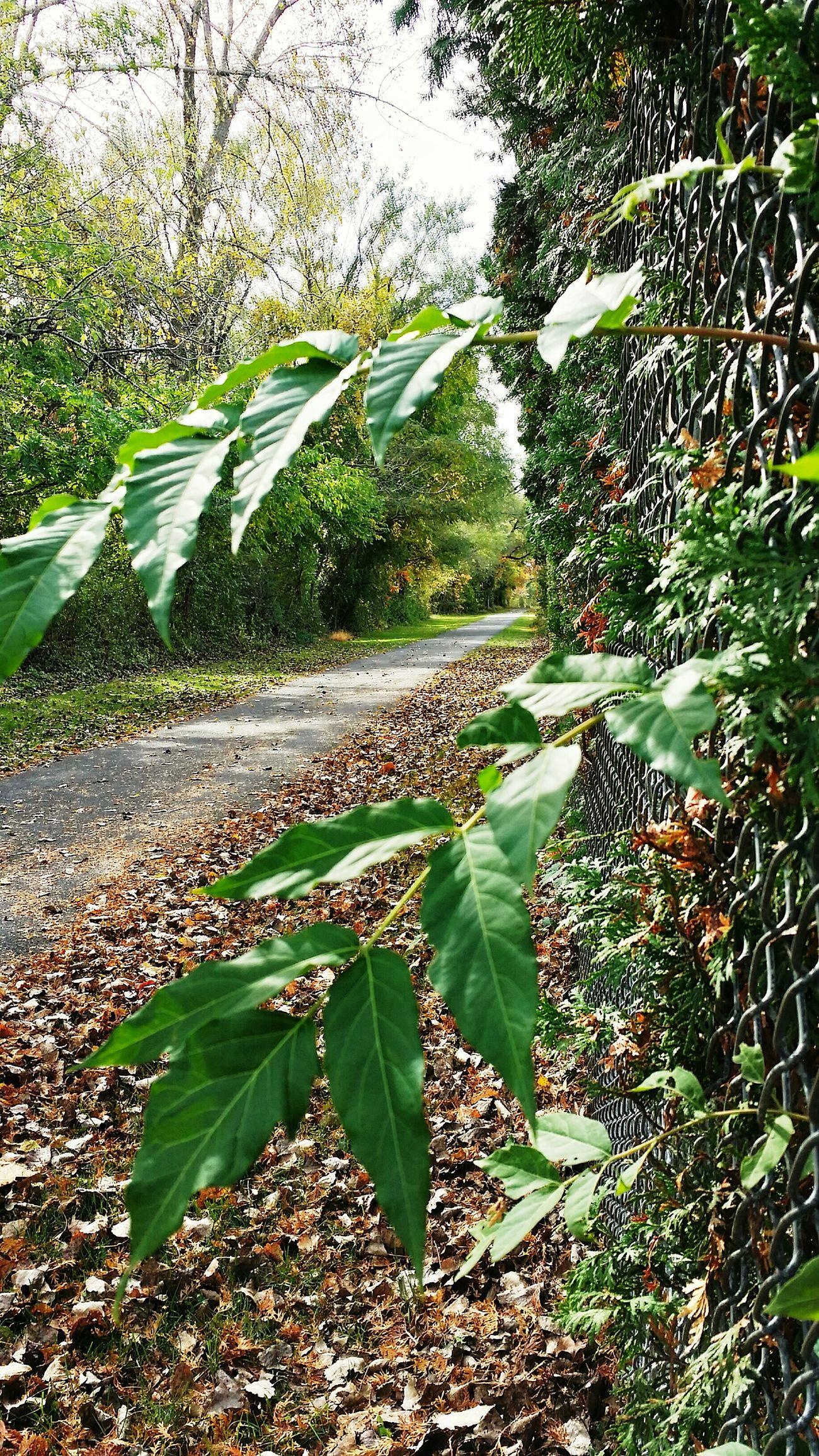 Bike Trail Nature Falling Leaves