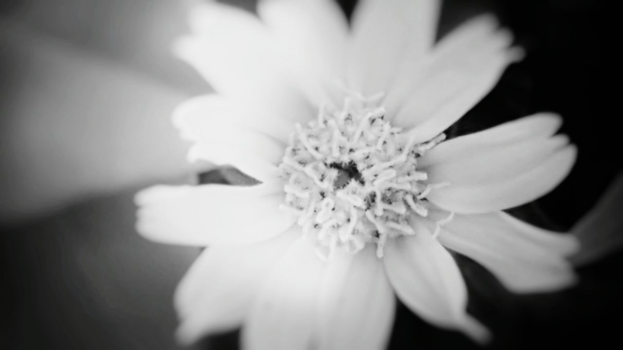 Flowers, Nature And Beauty Flower Photography Single Flower Simple Beauty Sunlight And Flowers Just Flower I Love It ❤ Calming Views Black And White Close-up Black And White Flower Collection White Flower Against Black Background Omg I Love It !!!❤ White Is Purity