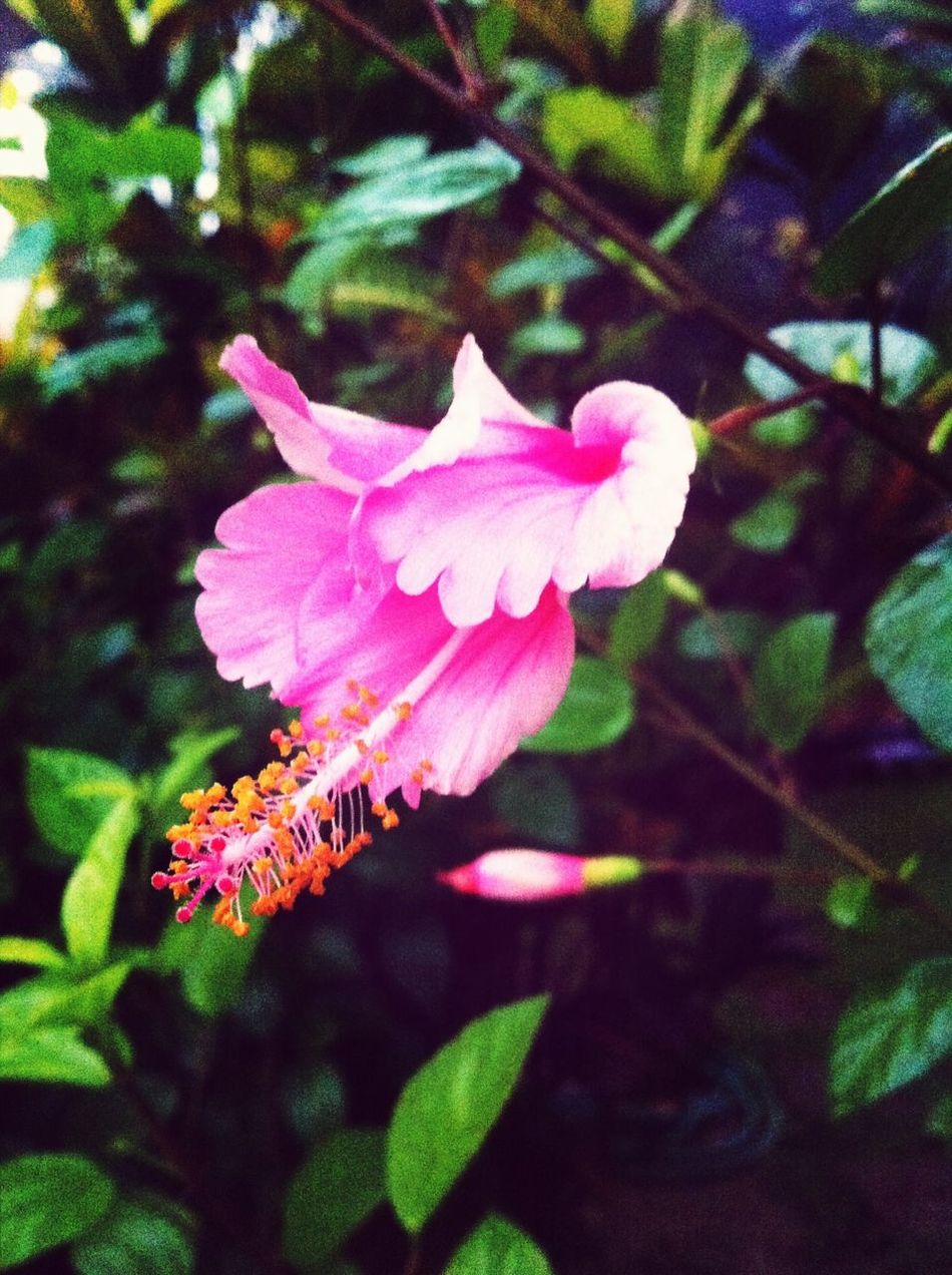 Morning Flowers Blooming Wintertime