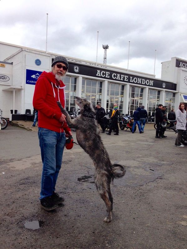 Sighthound LEO... The One Eyed Lurcher... Lurcher I Love My Dog That's Me Hanging Out London visit to the Ace Cafe!