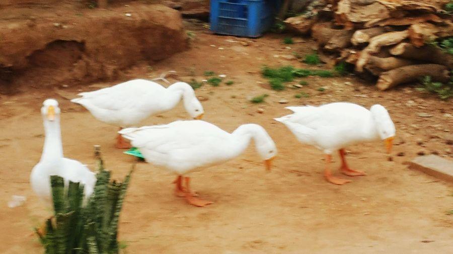 Ducking :D :)