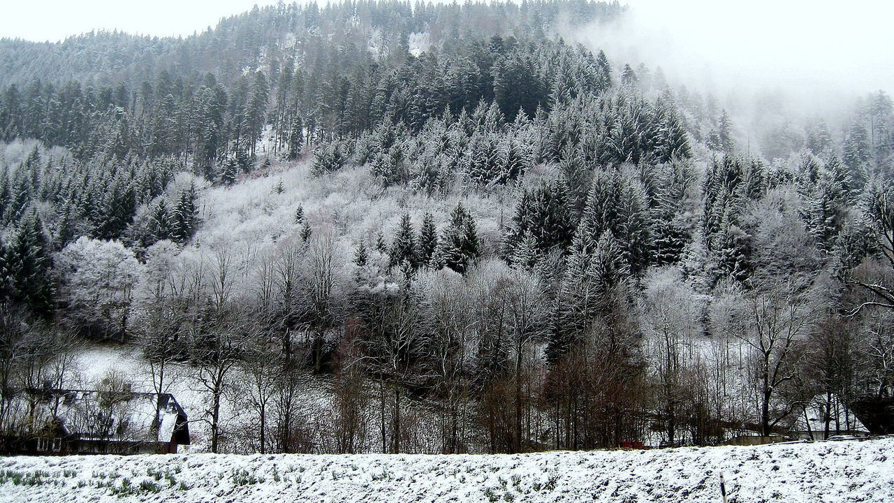Beauty In Nature Blackforest Cold Cold Temperature Forest Frost Landscape Nature SCHWARTZWALD Tranquility Weather Winter