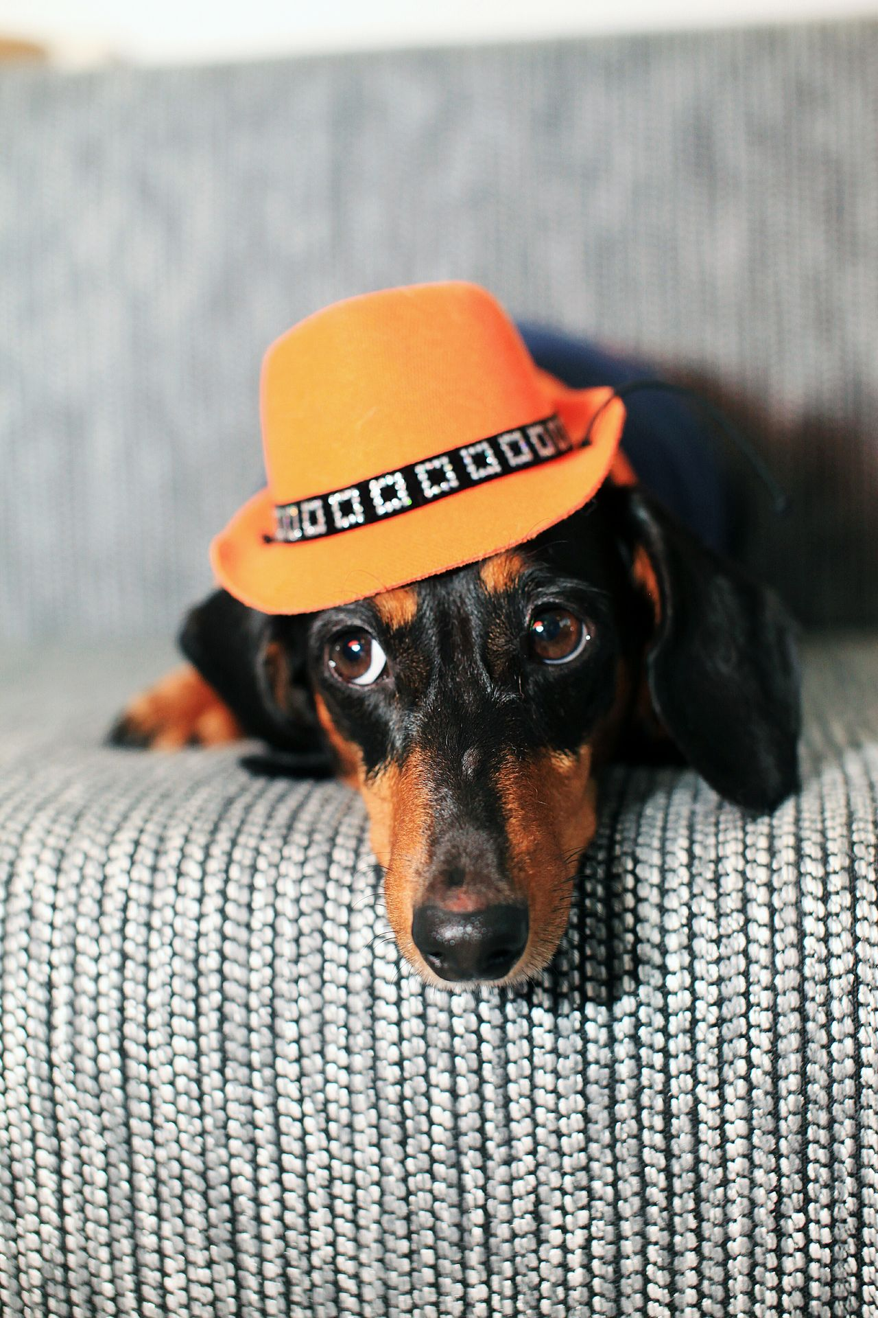 Pets Cute Pets Dog Love Pet Pet Photography  Pets Corner I Love My Dog Dog Dachshund