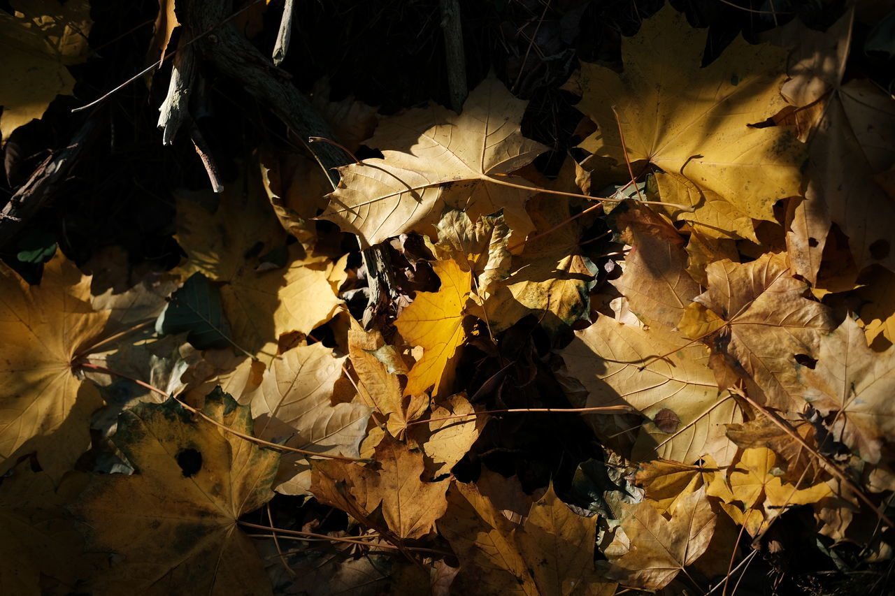 In the woods Autumn Autumn Colors Beauty In Nature Enjoying Life Eyeem Nature EyeEm Nature Lover Eyeem Sweden Fujifilm FUJIFILM X-T2 Höst Höstfärger Kungshamn Leaf Leaves Lov Natur Nature Outdoors Skogen Svensk Natur Sverige Sweden Swedish Nature Taking Photos Woods