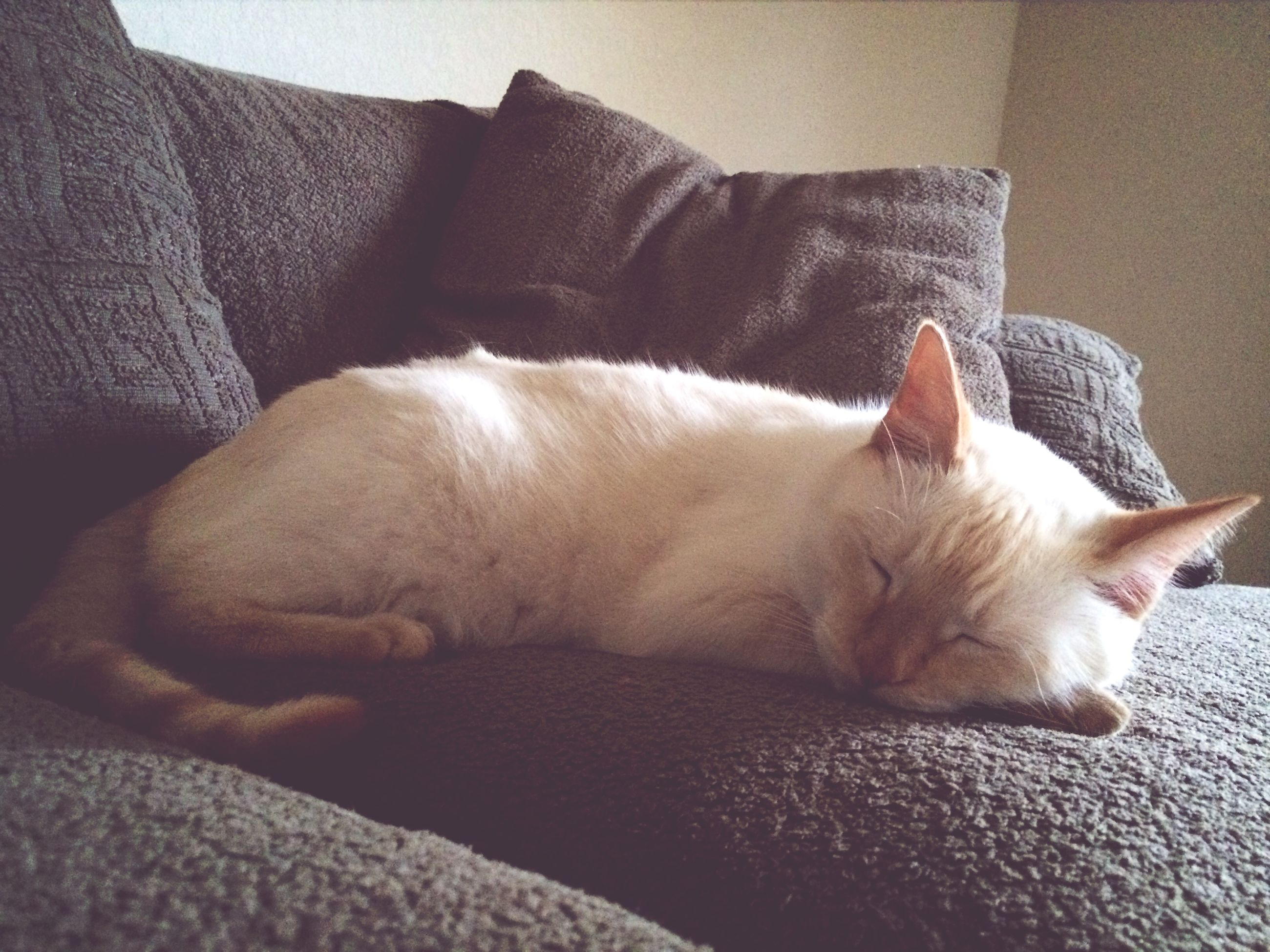 pets, domestic animals, domestic cat, cat, animal themes, mammal, relaxation, one animal, indoors, feline, resting, lying down, sleeping, bed, whisker, eyes closed, white color, home interior, close-up, comfortable