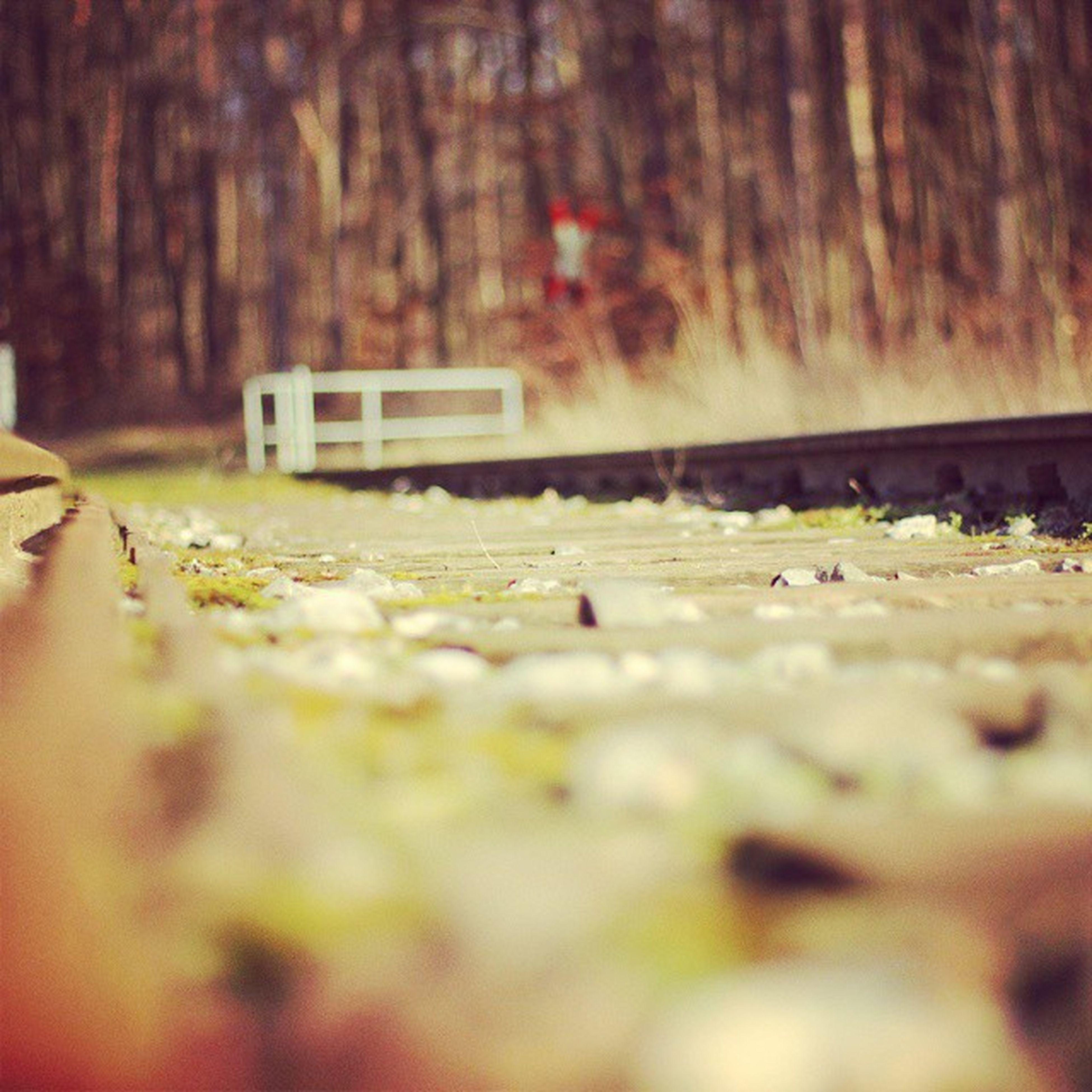 Es_fährt_kein_zug ,Zug ,Gleis ,Wald