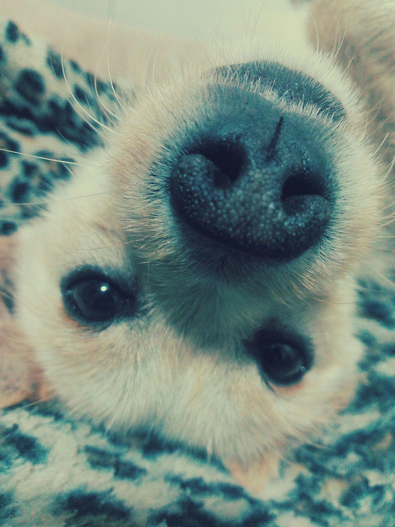 Ringo Dog❤ Lovedogs Loveanimals Letmetakeaselfie Selfietime Nose Check This Out Hello World Hi! Fun Animals Taking Photos