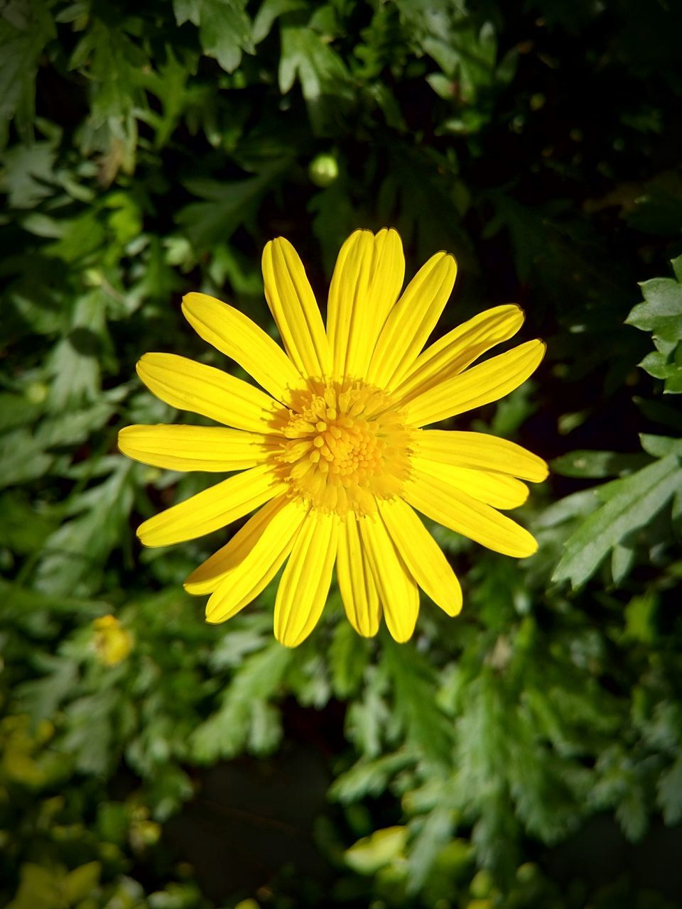 flower, yellow, growth, nature, plant, petal, blooming, beauty in nature, freshness, fragility, flower head, no people, outdoors