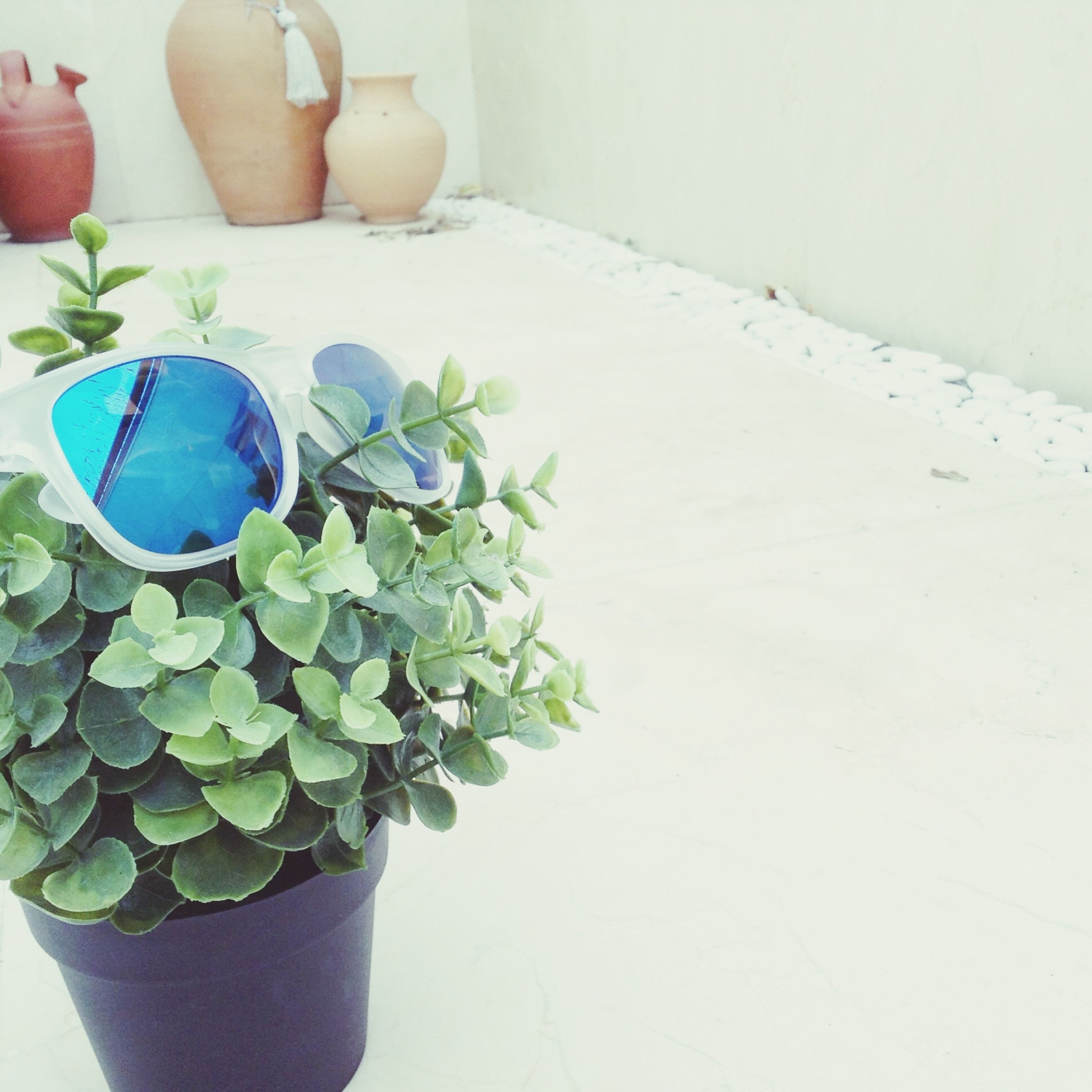 potted plant, plant, growth, leaf, close-up, wall - building feature, indoors, freshness, flower, flower pot, fragility, nature, day, botany, houseplant, green color, no people, patio, house plant, plant life, geometric shape, beauty in nature