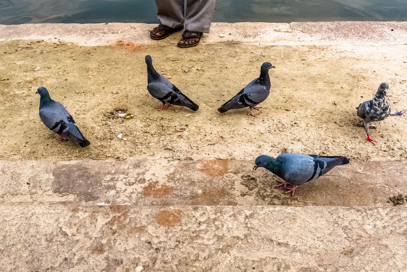 Bird Ganga Human Leg Md Johirul Islam Outdoors Street Photography Streetphotography The Street Photographer - 2017 EyeEm Awards Varanasi, India Ganges, Indian Lifestyle And Culture, Bathing In The Ganges,