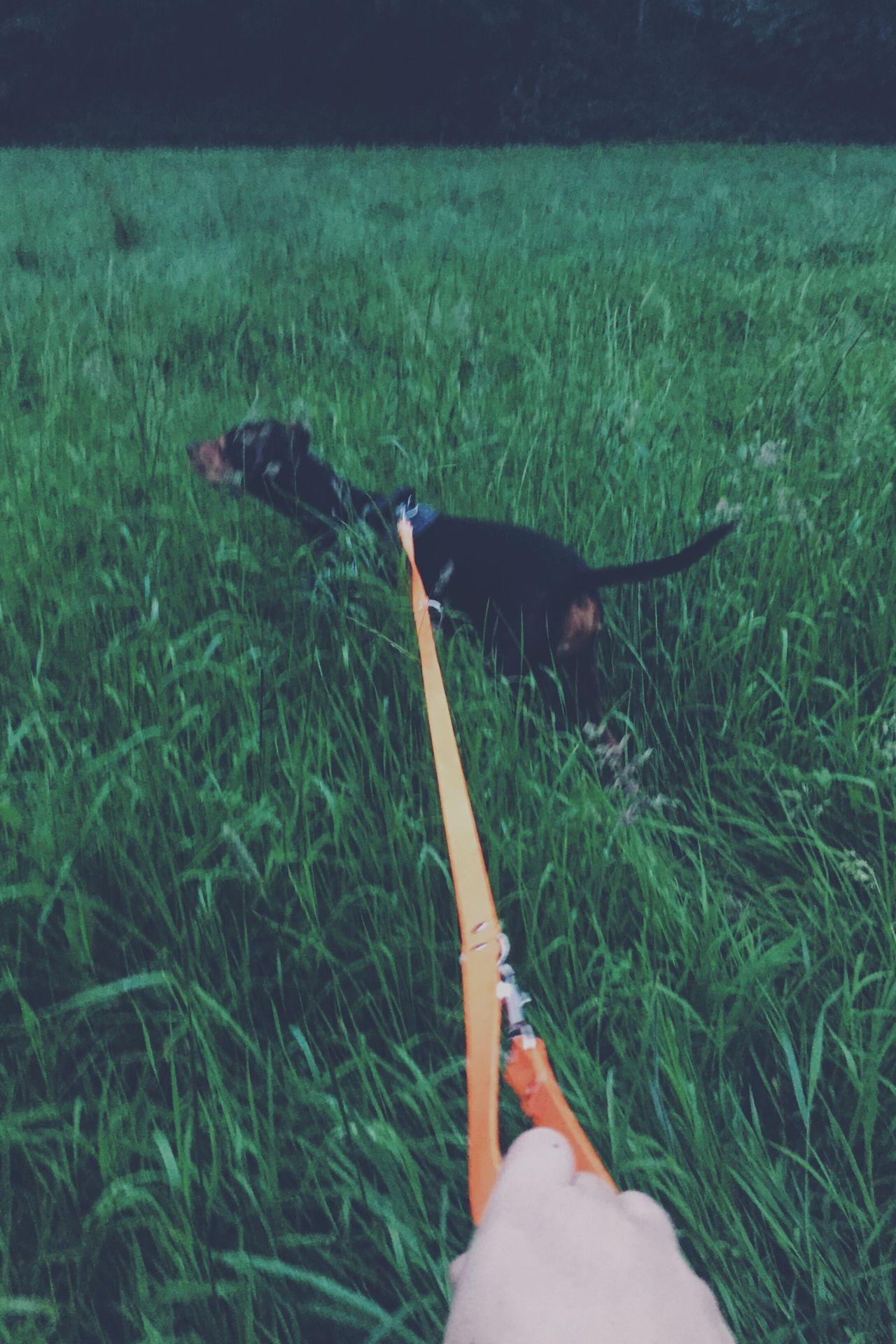 Followme Dog Walk Grass Orange Meadow Hand