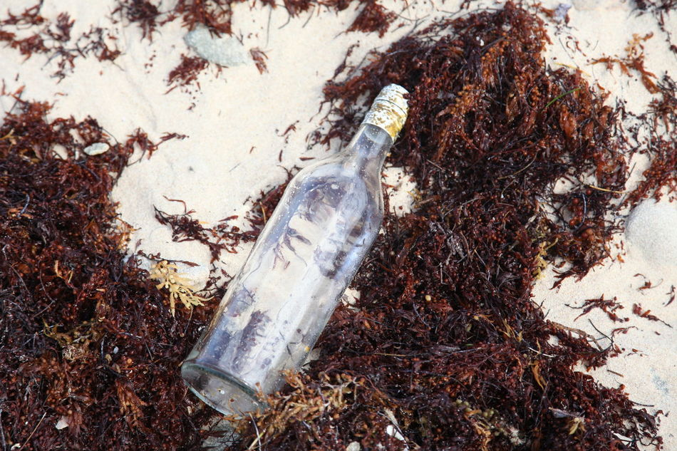 Message in an empty bottle Beach Beachlife, Close-up Day Deterioration Dirty Ground Growth Message In A Bottle Messy Nature No People Outdoors Plant Run-down