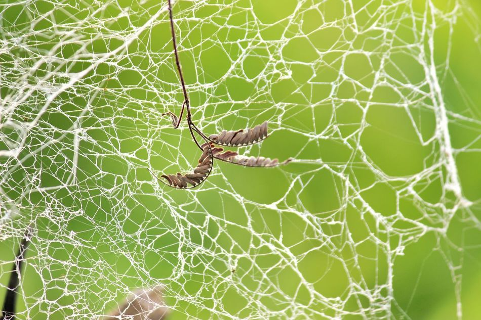 Stay Away You Will get trapped.... Spider Web Spider Survival Nature Web Animal Themes Close-up Outdoors Day No People Leaf Beauty In Nature Full Length Green Green Green Green!  Green Color Greenery