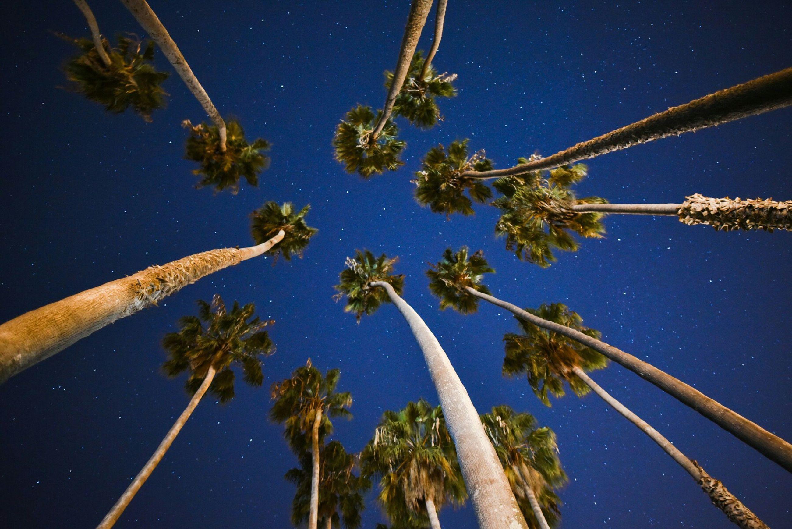 Nightphotography Night In Beach Palms Stars