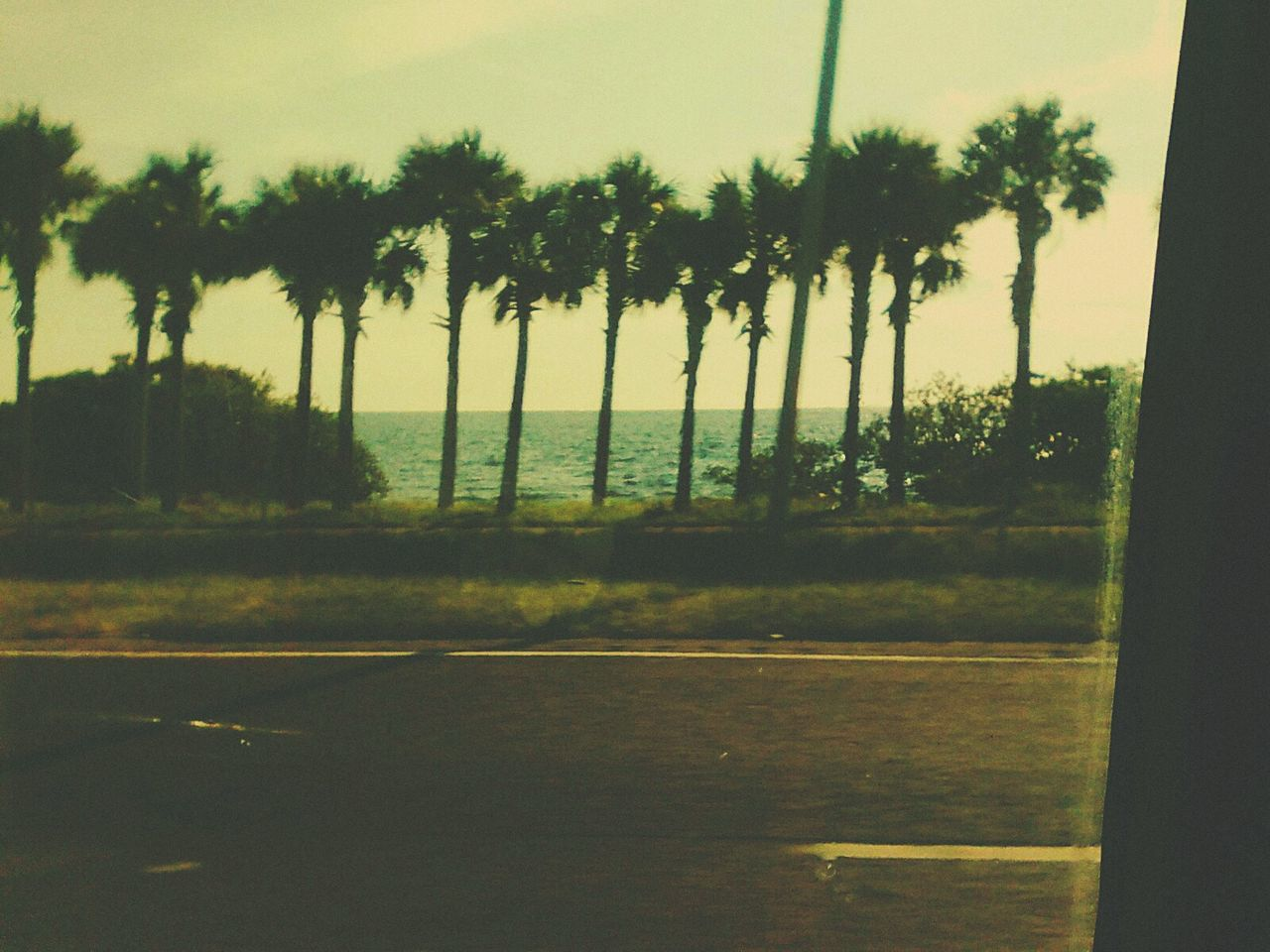 Scenics Remote Nature Paradise Palm Trees Row Of Palms Row Of Palm Trees On The Road Outdoors Florida Florida Nature Florida Life Florida Beauty Beauty In Nature Solitude Trees Tropical Tropical Paradise Tropical Beauty EyeEm Nature Lover Tranquility Water Sunny Sky Sunny Side Of Life Driving