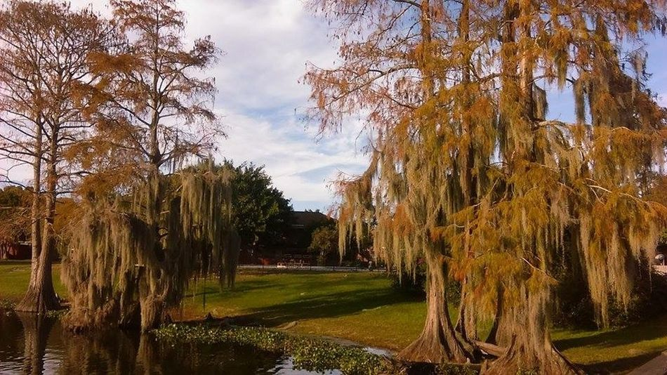 Showcase: January Nature_collection EyeEm Nature Lover EyeEm Best Shots Outdoor Photography Scenery Shots Landscape_Collection Spanishmoss Simplyscenic Simplyscenic_photography