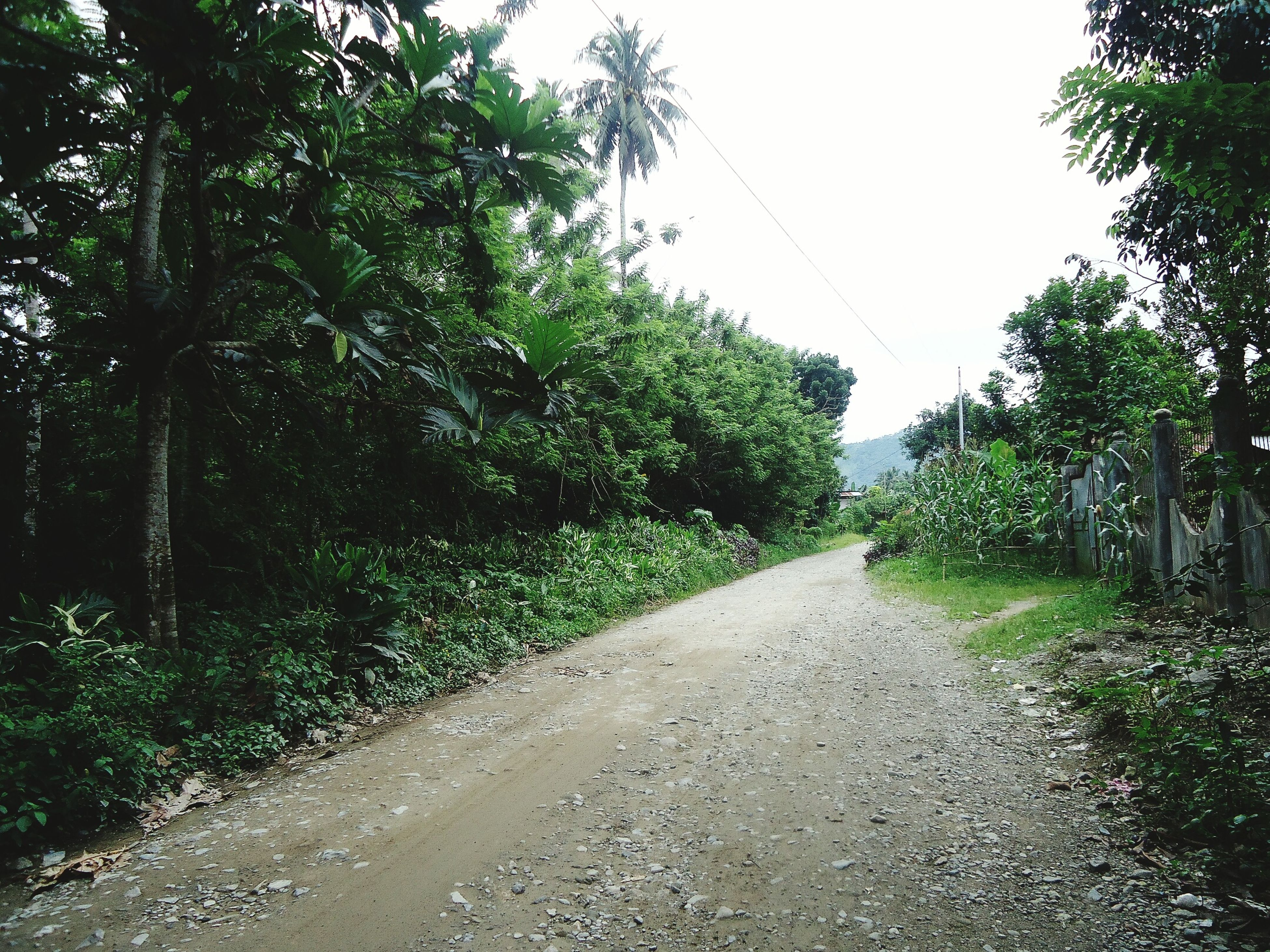 Tree Outdoors No People Nature Day The Way Forward Growth Road Beauty In Nature Sky Simple Village Life