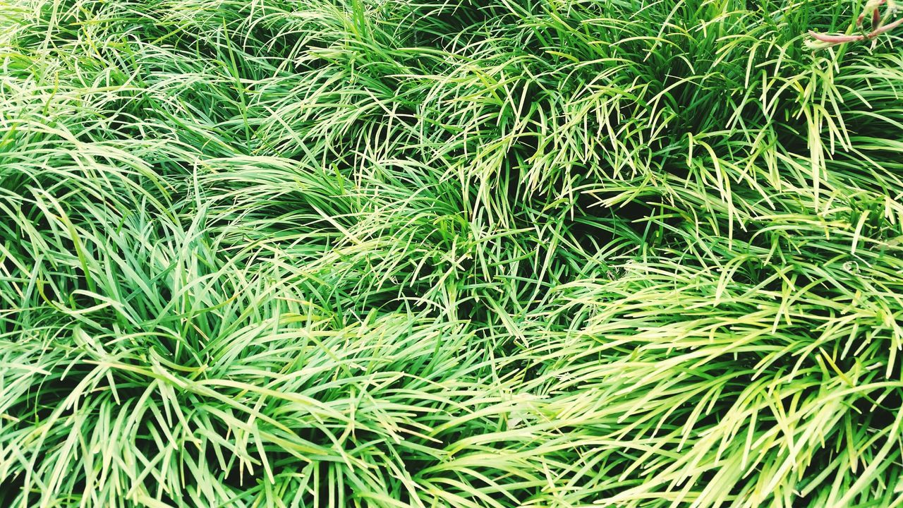 green color, full frame, growth, nature, backgrounds, plant, no people, grass, outdoors, close-up, day