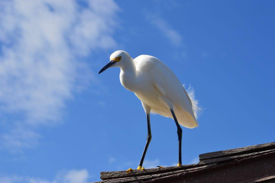 Vogel am Pier in Naples, Florida Florida Naples Pier Vogel Bird