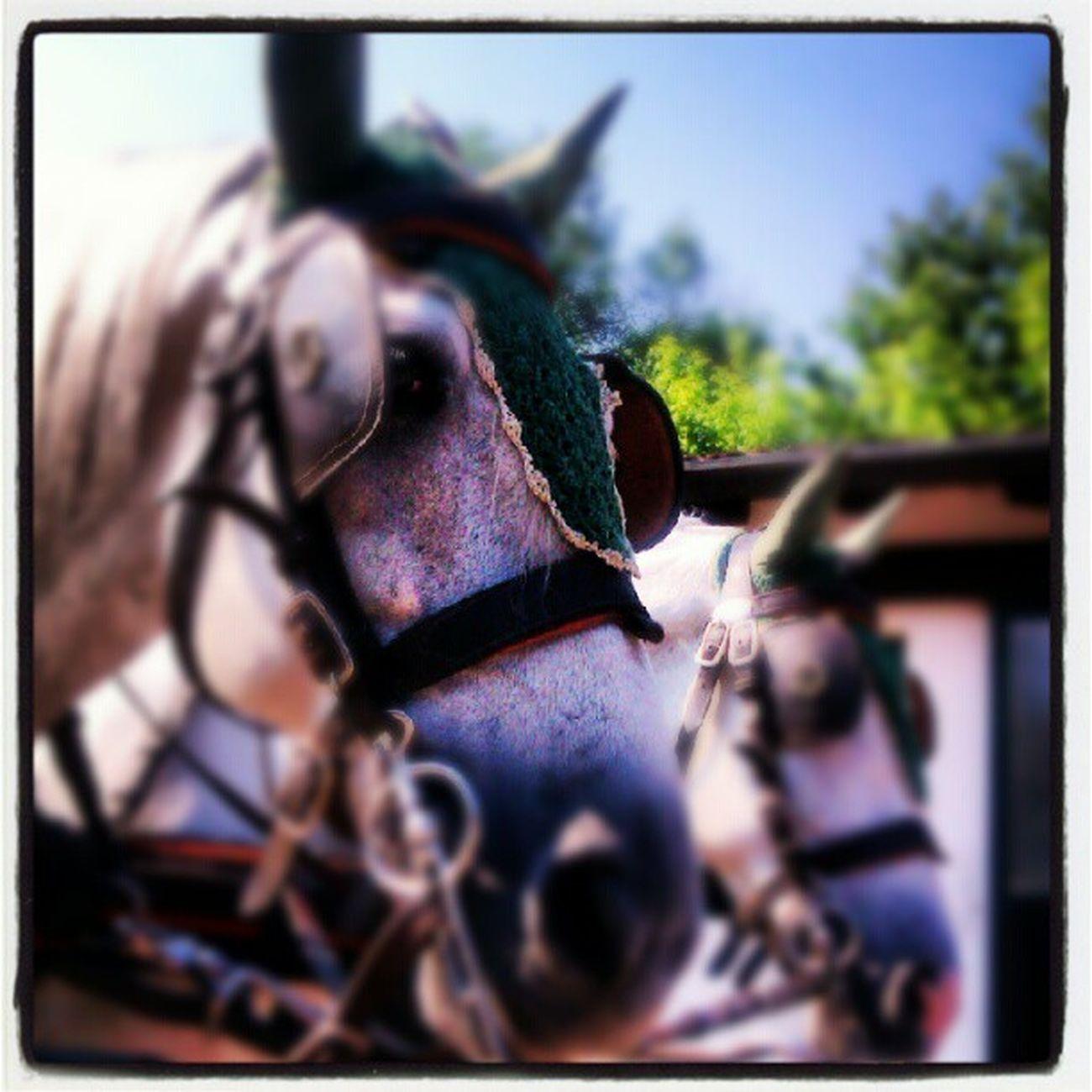 Io e Zoli Welovedrivingsport Combineddriving Fahrsport Sportkörning Drivingsport Pony Yourdailyhorses Equestrian Carriagedriving Attelage