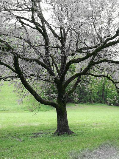 Walking Around Baum Baum & Zeit Farbfilter Taking Photos Landschaftsfotografie