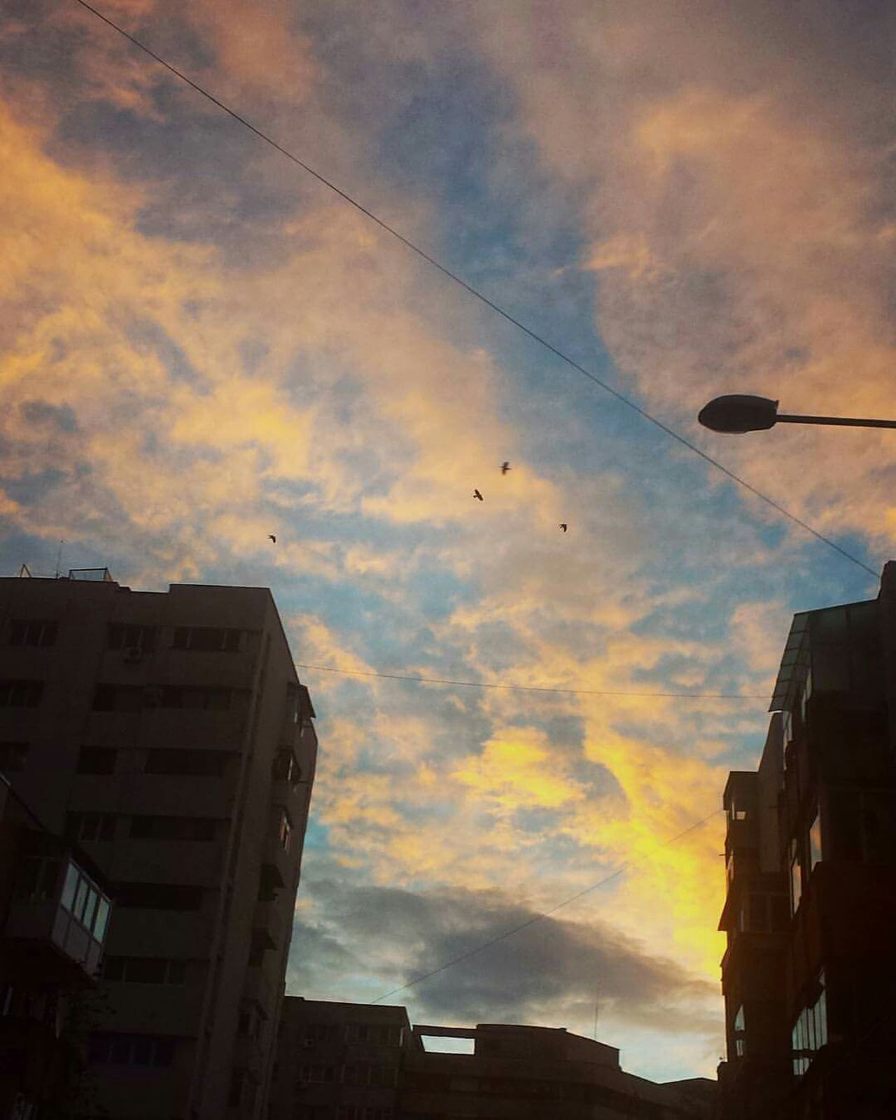 Goodmorning :) Goodmorning EyeEm  Sunshine Birds Spring Sunrise Sky