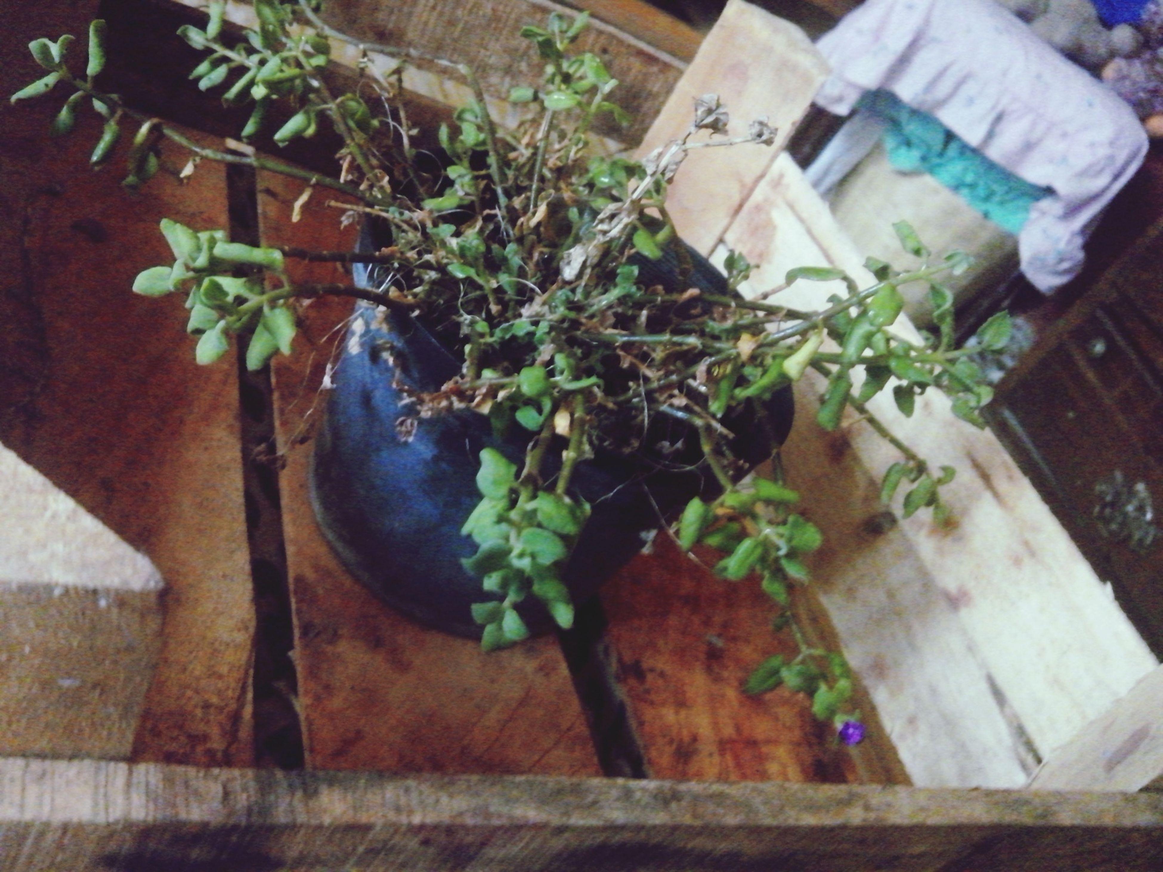 Las plantas y flores son como el amor, si dejas de regarlo se secará... Plant Flores De Amor <3