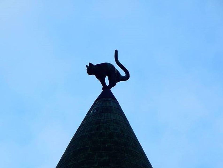 Melnā kaķa māja 🐱 The black cat house 🐱🐱🐱 Riga Riga Rigaplaces Rigaphotos Latvija Latvia Latvijasskati Vecriga OldRiga Melnaiskakis BLackCat Baltictrend Bestofbaltics Visit_latvia